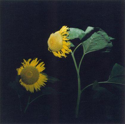 Rinko Kawauchi: Untitled (from the series: Uatatane), 2001 ©Rinko Kawauchi
