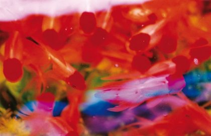 Mika Ninagawa: Liquid Dreams, 2003