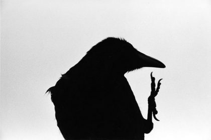 Masahisa Fukase: Erimo Cape. 1976 ©Masahisa Fukase